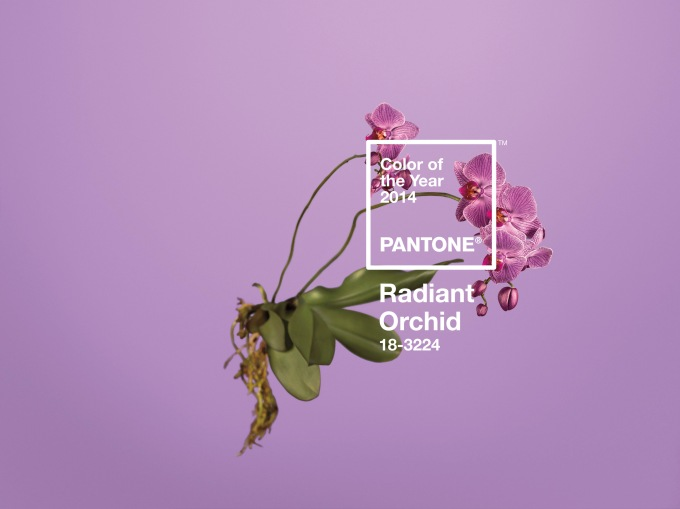 Positively Radiant [Orchid] in 2014